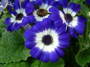 Mayo flor