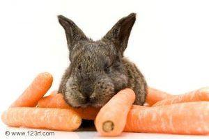 4466922-conejo-con-zanahorias