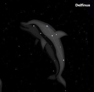 Delfinus-300x294