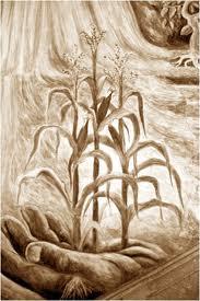 hombre de maiz
