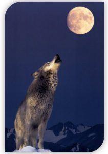 Luna llena del lobo