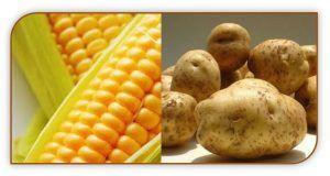 maiz y papas1