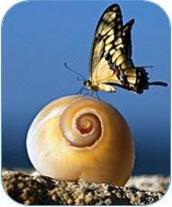 Mariposa sobre caracol
